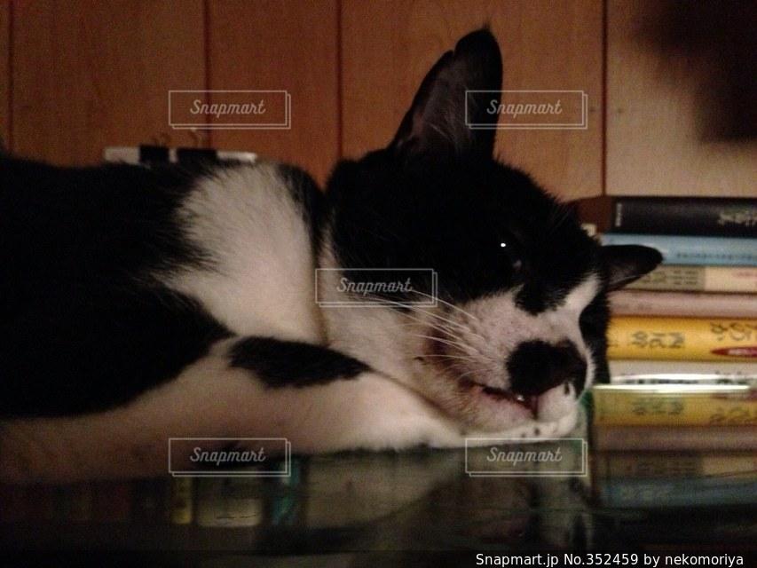 猫 - No.352459