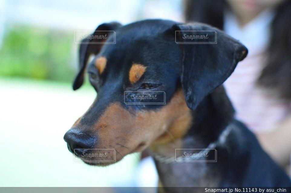 犬の写真・画像素材[11143]