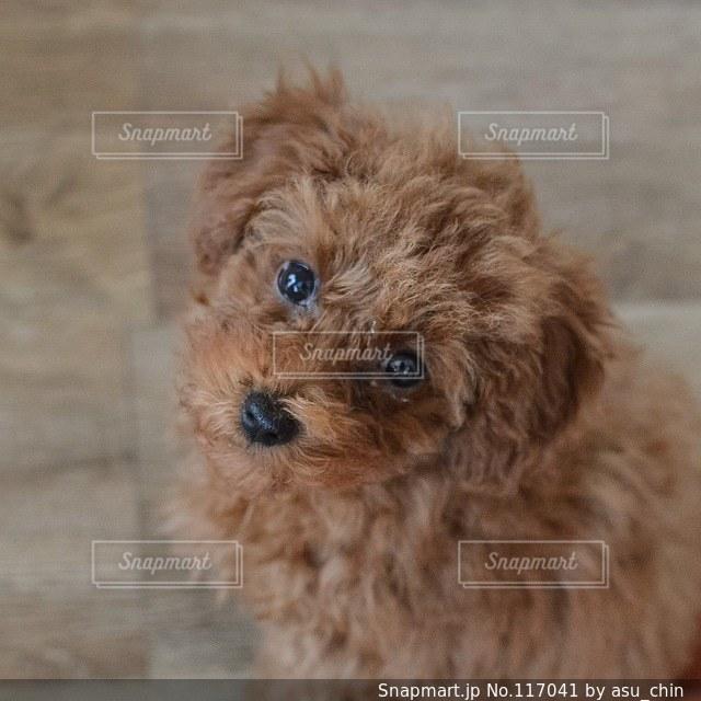 犬の写真・画像素材[117041]