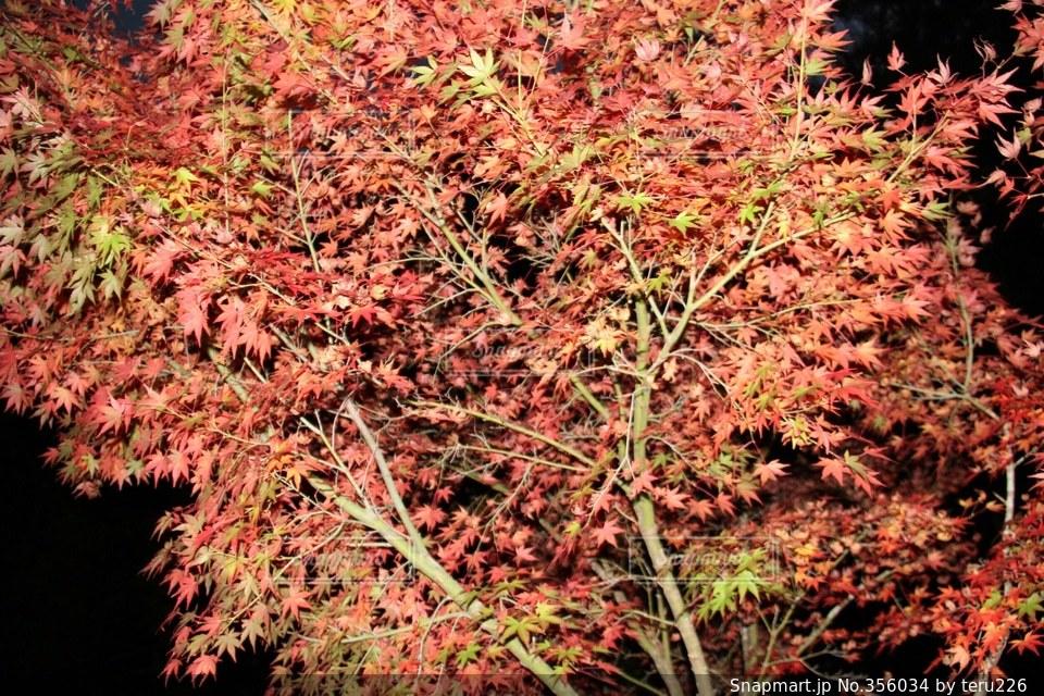 自然,空,秋,紅葉,森林,緑,赤,オレンジ