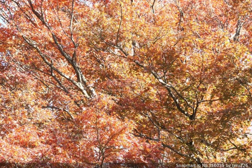 自然,空,秋,紅葉,森林,緑,オレンジ,黄
