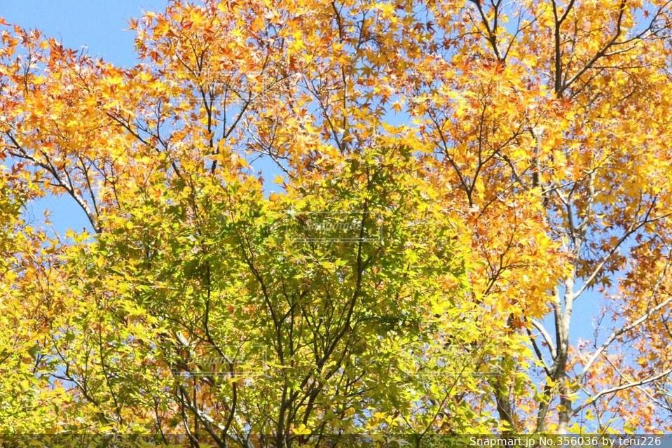 自然,空,秋,紅葉,森林,緑,黄