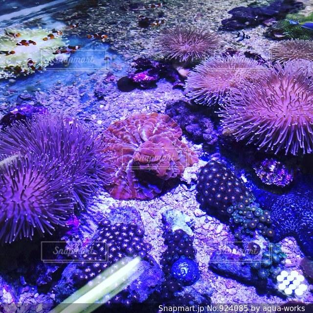 近くに珊瑚のアップの写真・画像素材[924085]