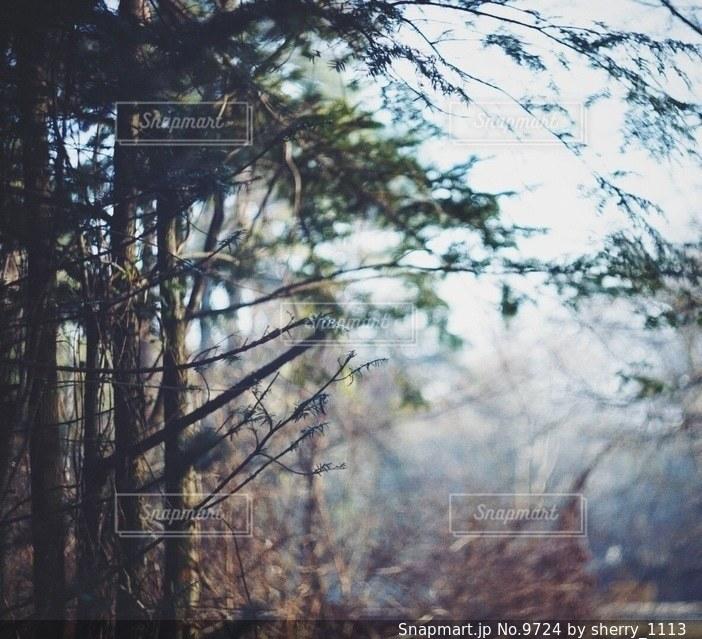 自然の写真・画像素材[9724]
