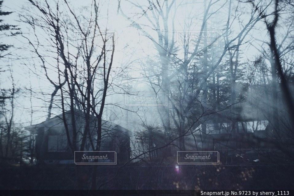 自然の写真・画像素材[9723]