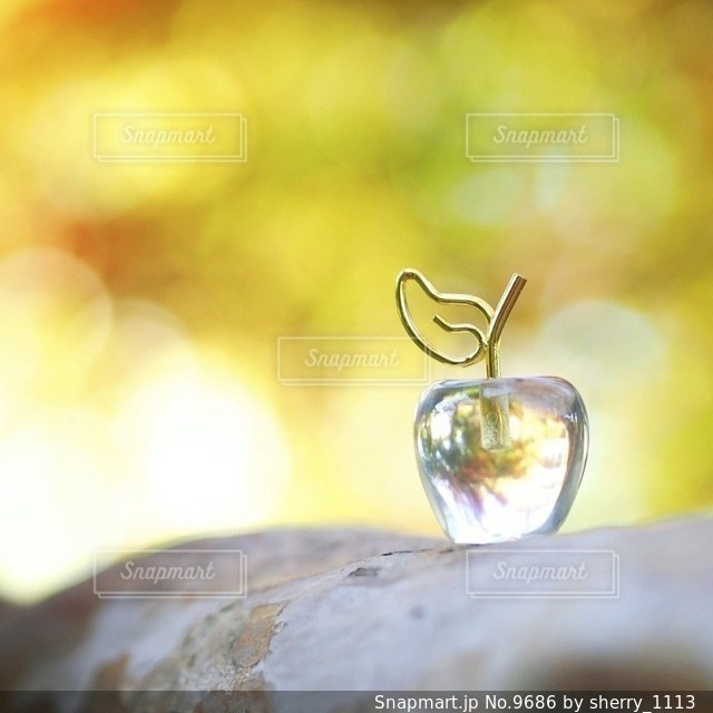 自然の写真・画像素材[9686]