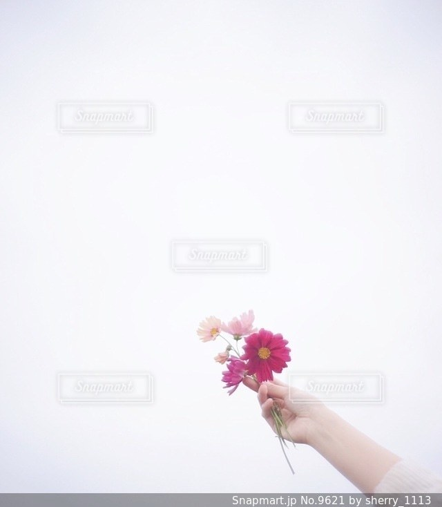 女性の写真・画像素材[9621]