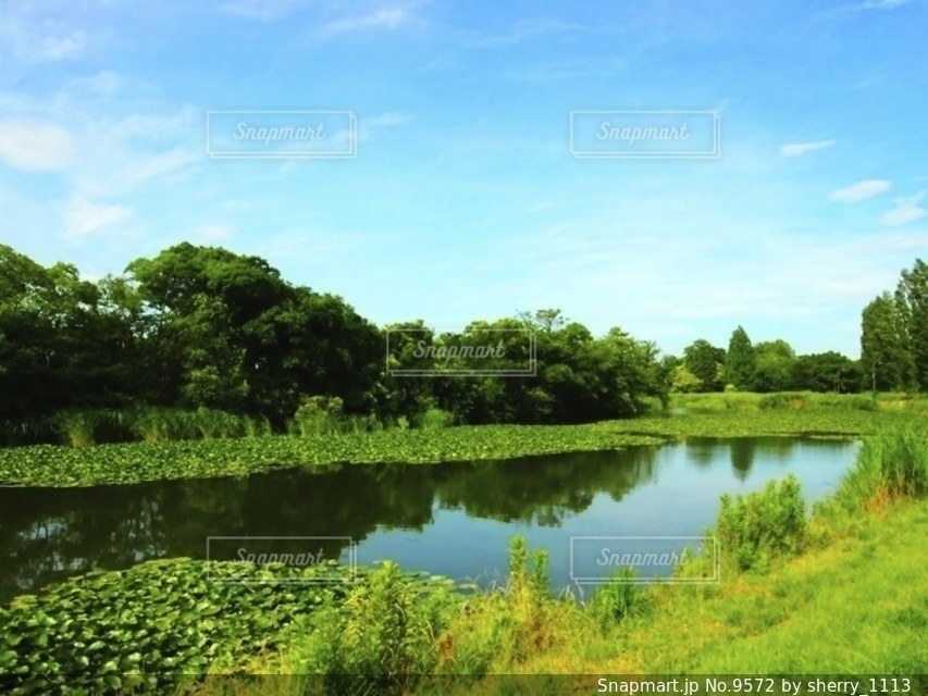 自然の写真・画像素材[9572]