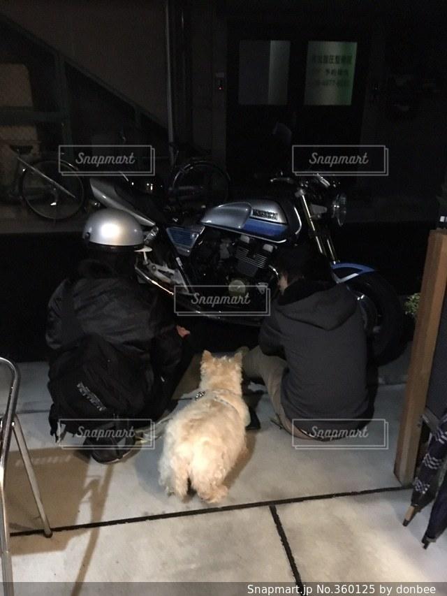 犬,夜,バイク,仲良し,仲間