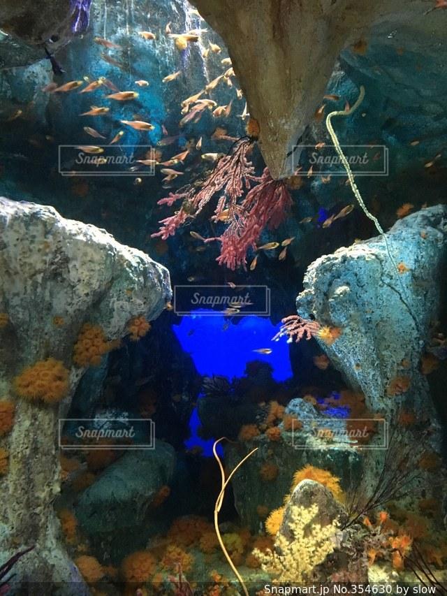 魚,きれい,サンゴ,水族館,池袋,サンシャイン