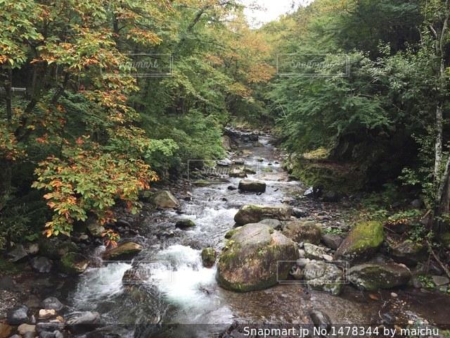 群馬県 水上高原の水源林の写真・画像素材[1478344]