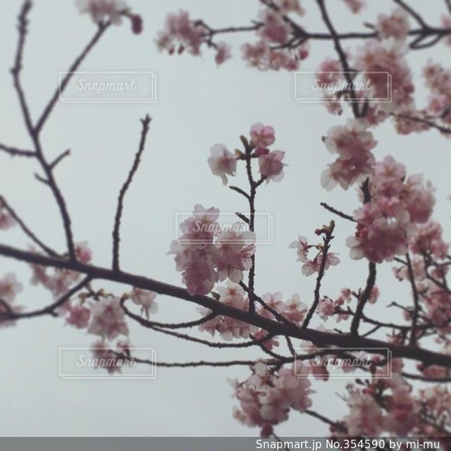 自然の写真・画像素材[354590]