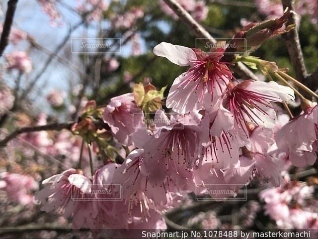 雨にも負けず、開花してくれました。の写真・画像素材[1078488]