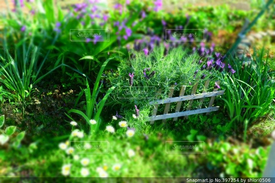自然,風景,花,春,庭,緑,植物