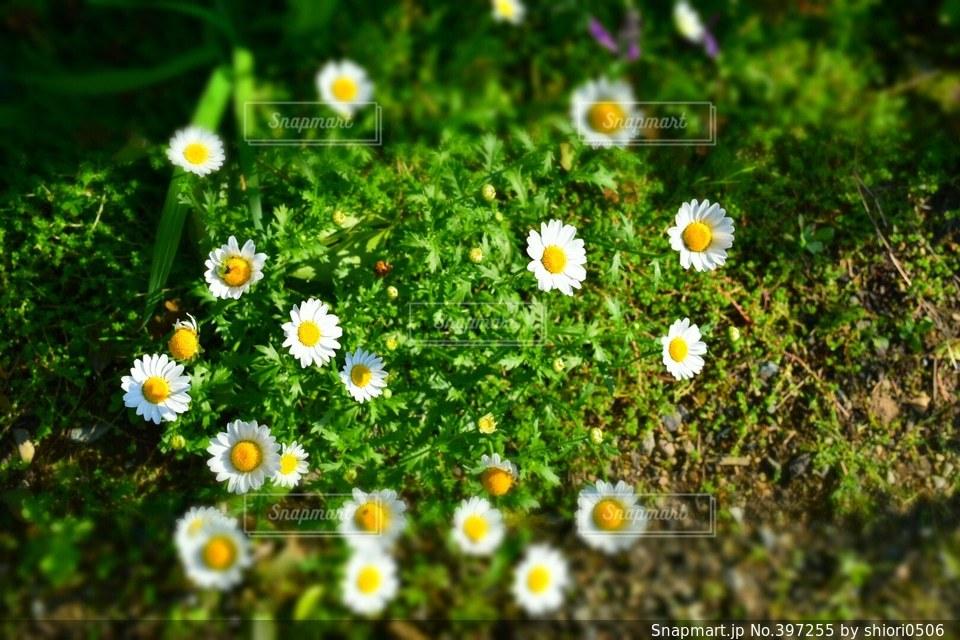 自然,花,春,庭,緑,植物,白