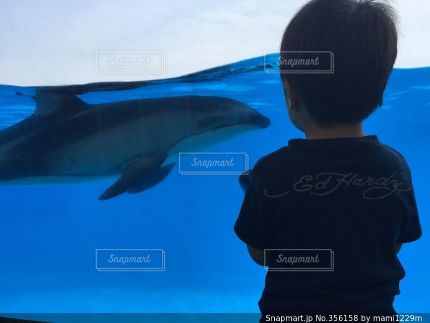 イルカ,後ろ姿,子供