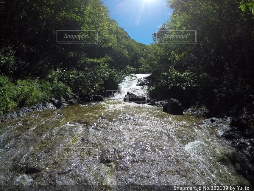 自然,森林,森,川,林,北海道,景色