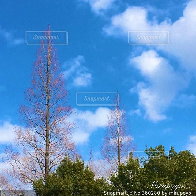空,木,青空,散歩,晴れた日
