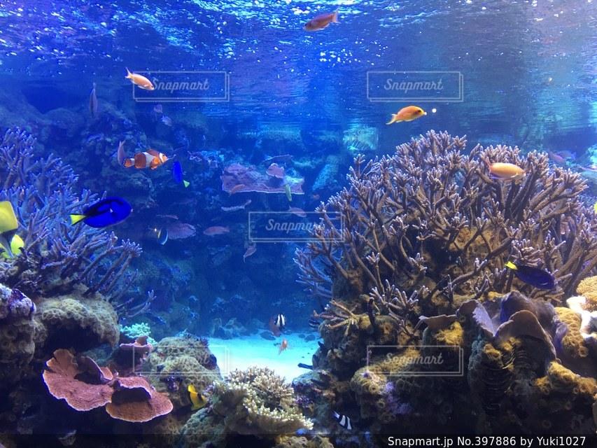 魚の写真・画像素材[397886]