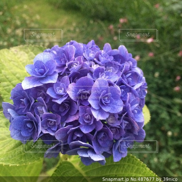 花の写真・画像素材[487677]