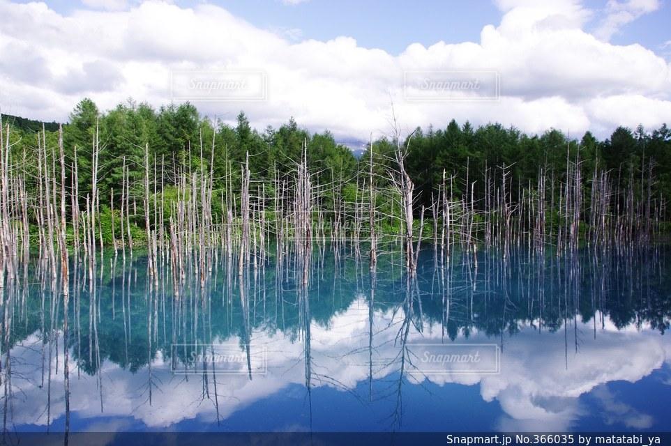 自然の写真・画像素材[366035]