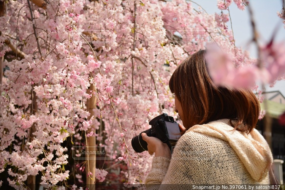 女性,桜,カメラ女子,京都,綺麗,青空,KYOTO,東寺,淡い