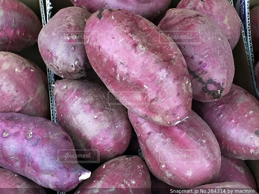 野菜の写真・画像素材[384314]