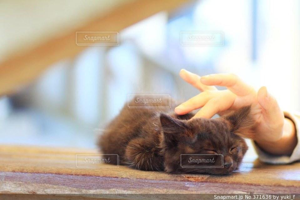 猫の写真・画像素材[371636]