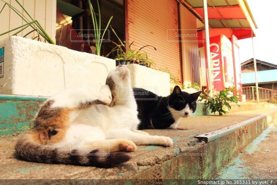 猫,風景,動物,ねこ,子猫,仔猫,睡眠,眠い,アニマル,猫島,田代島,痒い,かゆい