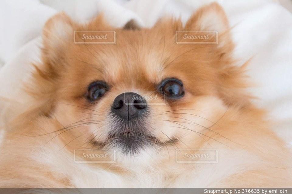 犬の写真・画像素材[376635]