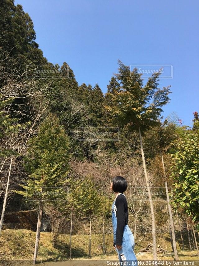 緑,青空,田舎,山,森林浴