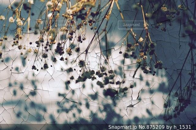枝の上に座って鳥の写真・画像素材[875209]