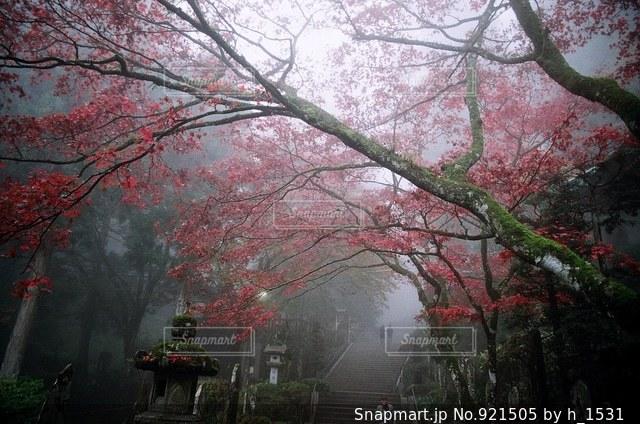 近くの木のアップの写真・画像素材[921505]