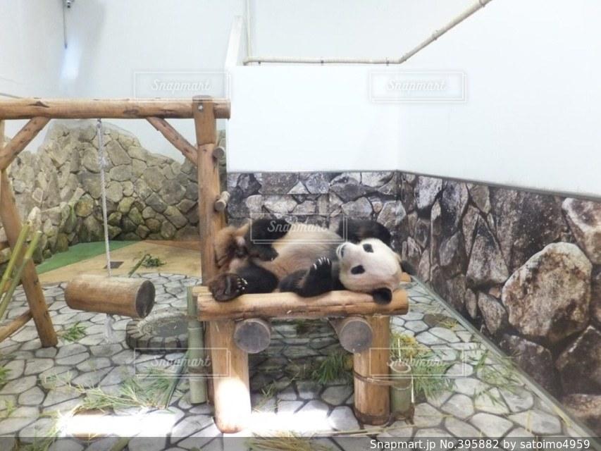 夏,動物,白,かわいい,黒,寝る,寝転がる,パンダ,アドベンチャーワールド,夏バテ