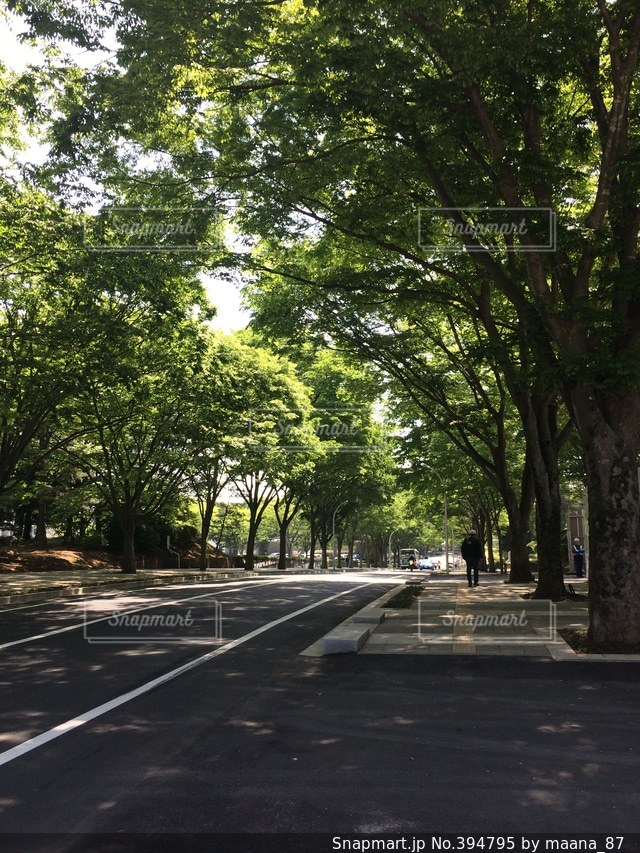夏,木,緑,青葉,道路,道,木陰,初夏