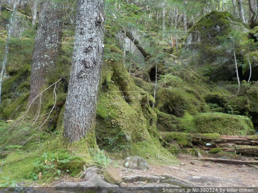 自然,風景,森林,山,登山,八ヶ岳,赤岳