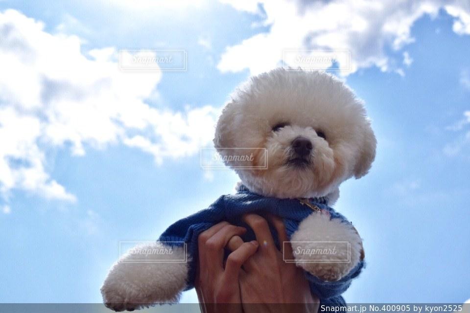 犬の写真・画像素材[400905]
