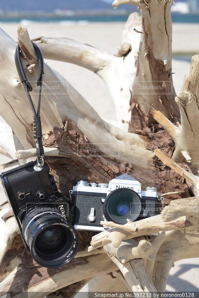 海,白,青,爽やか,キラキラ,フィルム,流木,爽快,Nikon,フィルムカメラ,F2,ニコン,F