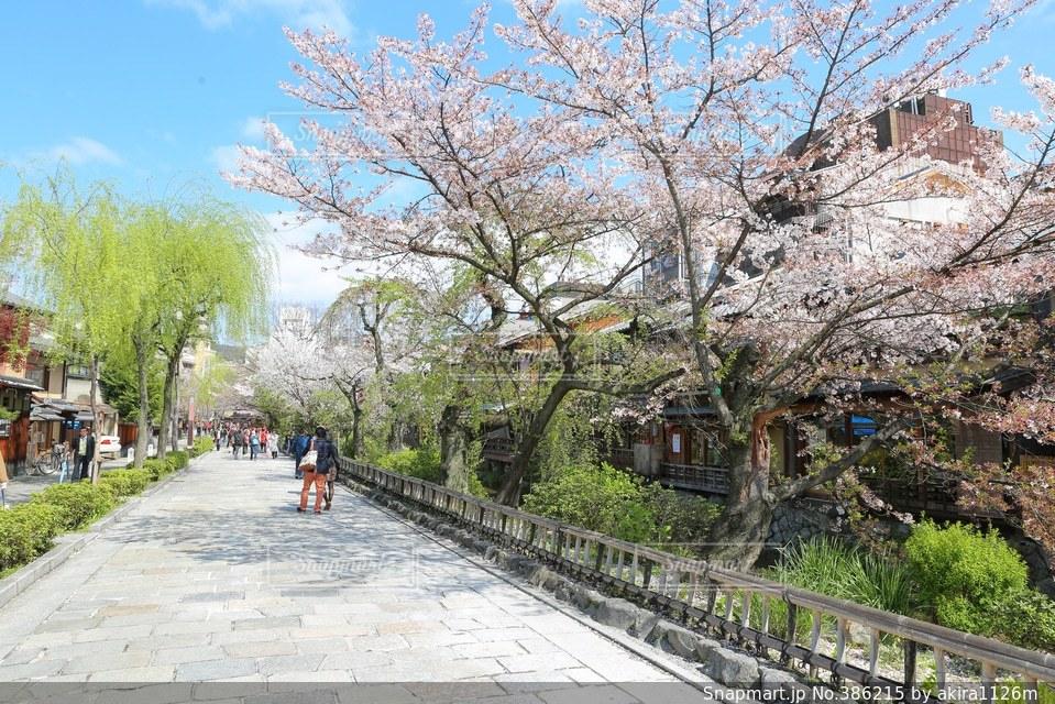 桜 - No.386215