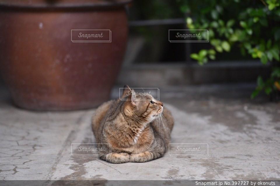 猫,動物,にゃんこ,癒し,可愛い,モフモフ,野良猫,ニャンコ