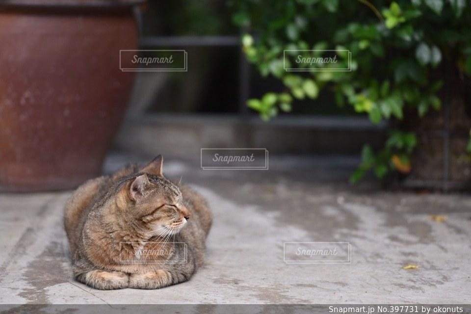 猫,動物,にゃんこ,昼寝,寝顔,癒し,可愛い,モフモフ,野良猫,お昼寝,ニャンコ