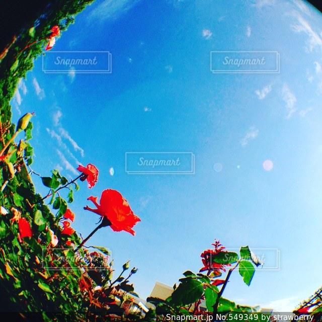空の写真・画像素材[549349]