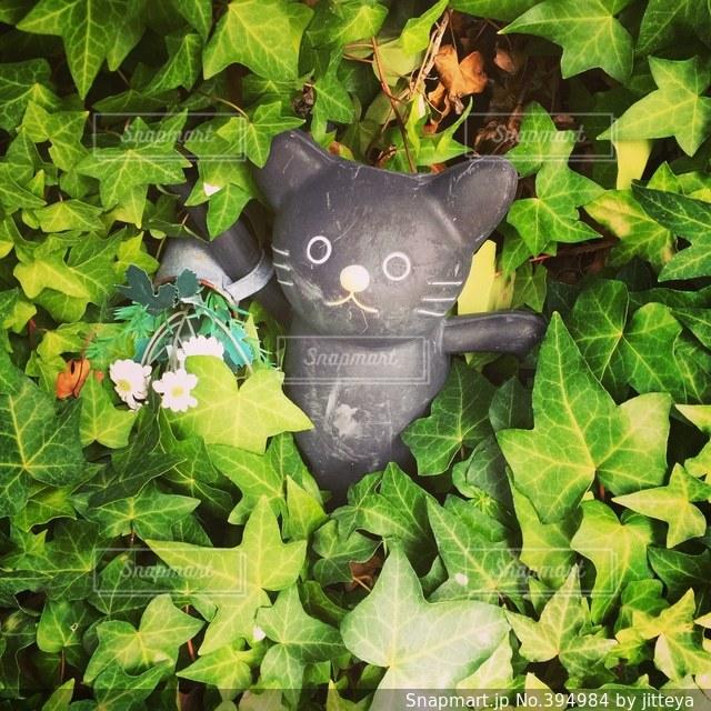猫,浅草,ガーデニング,招き猫,今戸神社