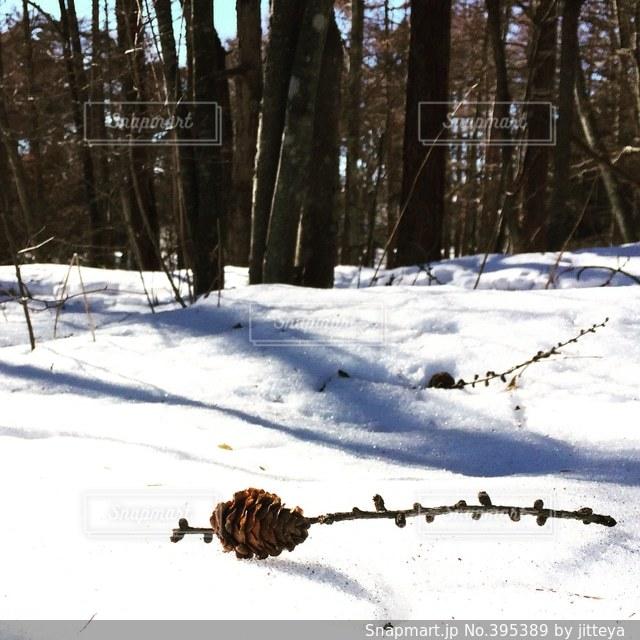 雪の写真・画像素材[395389]