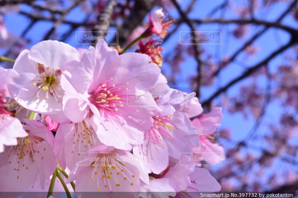 春,カメラ,桜,Nikon,Spring,写真家,写真好きな人と繋がりたい,D5300,photography,cheryyblossom
