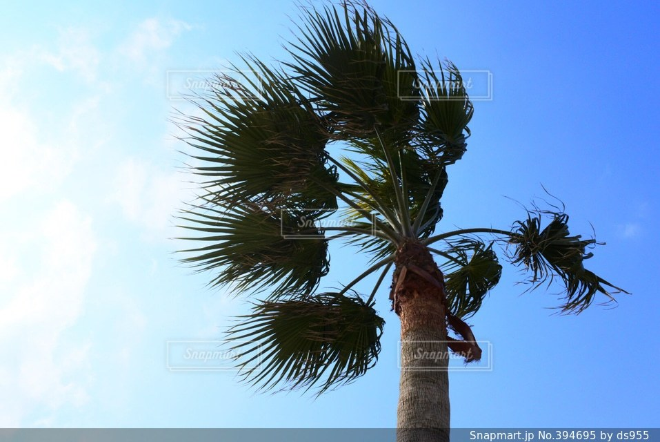 自然,空,木,ヤシ,糸島サンセット