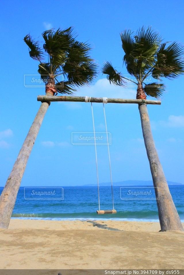 海,空,ブランコ,ヤシ,糸島サンセット