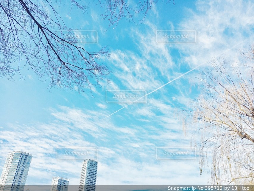自然,空,雲,青空,日常,上野,日本,青春,お散歩