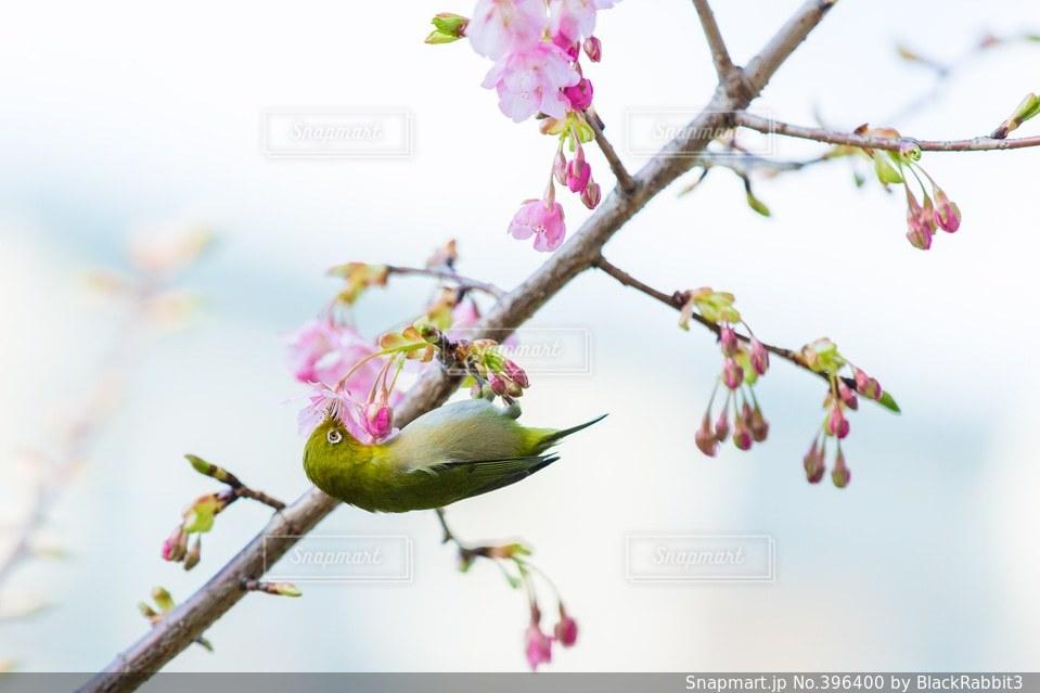 自然の写真・画像素材[396400]