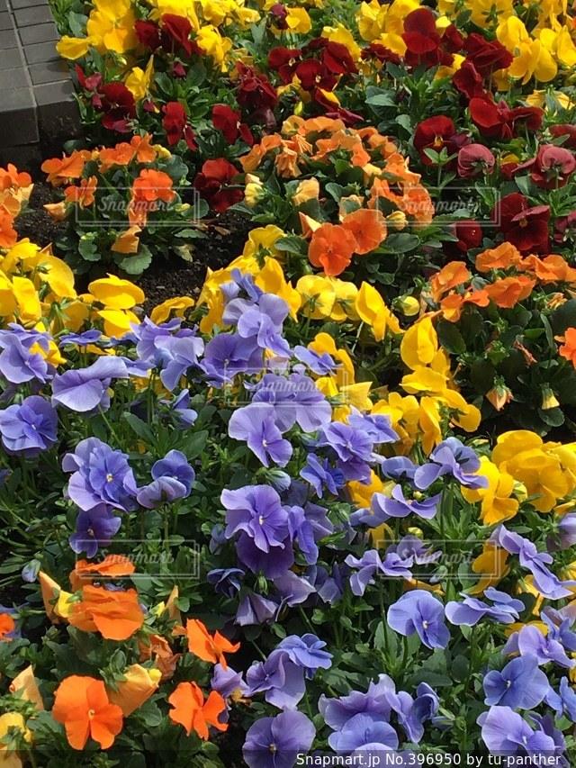花,春,カラフル,花見,ハナミズキ